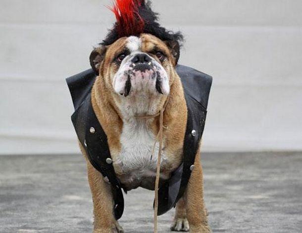 Rufio Dog